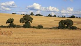 Schöne Felder nach Ernte auf Iren Lizenzfreies Stockbild