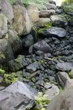Schöne Felsen, Anlagen und Moos lizenzfreies stockfoto
