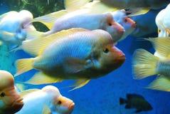Schöne Fische Stockbilder