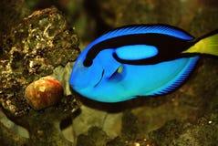 Schöne Fische Lizenzfreie Stockbilder