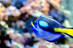 Schöne Fische Stockbild