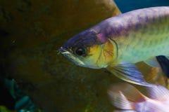 Schöne Fische - Aquarium Dubai stockbild