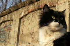 Schöne flaumige getigerte Katze Lizenzfreie Stockfotografie