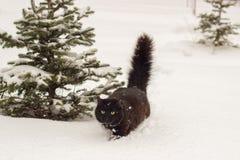 Schöne flaumige schwarze Katze mit gelben Augen auf weißem Schneewinter Stockbilder