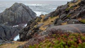 Schöne Flechte auf einem Felsen auf den Ufern der Nordsee lizenzfreie stockfotos