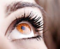 Schöne Form des weiblichen Auges Stockbilder