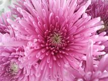 Schöne Frühlings-Blumen, die unter dem Sun, verschiedene Arten von Blumen blühen lizenzfreie stockbilder