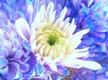 Schöne Frühlings-Blumen, die unter dem Sun, verschiedene Arten von Blumen blühen lizenzfreie stockfotos