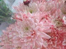 Schöne Frühlings-Blumen, die unter dem Sun, verschiedene Arten von Blumen blühen stockbild