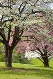Schöne Frühlings-Farben stockbilder