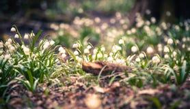 Schöne Frühlingsblume mit träumerischer Fantasie verwischte bokeh Hintergrund Frische Naturlandschaftstapete im Freien Stockfotografie