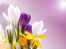 Schöne Frühlingsblumen Lizenzfreie Stockfotografie