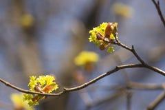 Schöne Frühlingsblumen auf einem Baumast Lizenzfreie Stockfotos