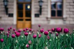 Schöne Frühlingsblumen in der Stadt Stockfoto