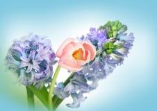 Schöne Frühlingsblumen für Muttertag Stockfoto