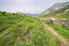 Schöne Frühlingsfarben Lizenzfreies Stockfoto