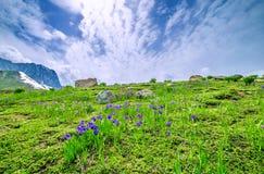 Schöne Frühlingsfarben Stockfotos