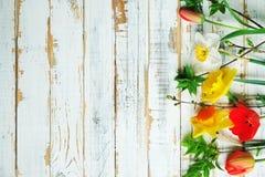 Schöne Frühlingsgelbnarzisse auf weißem hölzernem Hintergrund, Raum für Text, Lizenzfreies Stockfoto