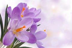 Schöne Frühlingskarte mit blauen Blumen. Stockfotos