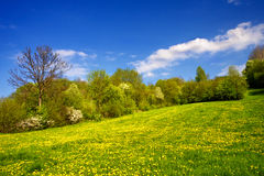 Schöne Frühlingslandschaft Stockfotografie