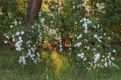 Schöne Frühlingslandschaft von wild lebenden Tieren stockfoto