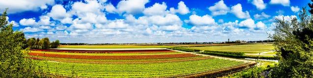 Schöne Frühlingstulpenfelder in den Niederlanden Lizenzfreie Stockfotografie