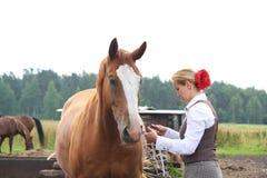 Schöne Frau, die Pferd betriebsbereit zum Reiten erhält Stockfotografie