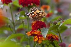 Schöne Frau gemalte Dame Butterfly Lizenzfreies Stockfoto