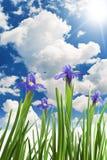 Schöne frische Blendenblumen Lizenzfreie Stockbilder