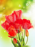 Schöne frische rote Gartentulpen Stockbild