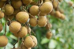 Schöne Frucht Lizenzfreies Stockfoto