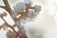 Schöne Fruchtblütenblume stockbilder