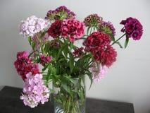 Schöne Gartennelke blüht in einem Vase auf einer Tabelle Blumenstrauß der violetten, purpurroten und rosa Mehrfarbenblume Dekorat stockbild