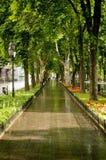 Schöne Gasse in Odessa Lizenzfreie Stockfotos