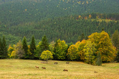 Schöne Gebirgslandschaft mit wildem horsesи Lizenzfreie Stockfotos