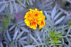 Schöne gelbe alleine Blume stockfotografie