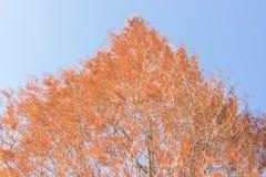 Schöne gelbe Baumblätter Lizenzfreie Stockbilder