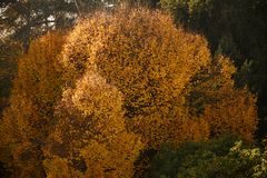 Schöne gelbe Blätter des Baums lizenzfreie stockbilder