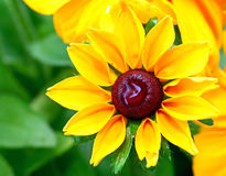 Schöne gelbe Blume Stockbild