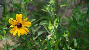 Schöne gelbe Blume Lizenzfreie Stockbilder