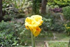 Schöne gelbe Blume Stockfotografie