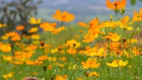 Schöne gelbe Blume der Videounschärfe und blauer Himmel verwischen Landschaft natürliches background3 im Freien stock video footage