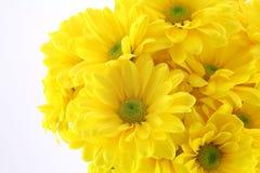 Schöne gelbe Blumen Lizenzfreies Stockfoto