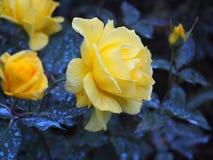 Schöne gelbe Blumen lizenzfreie stockfotos