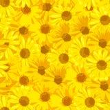 Schöne gelbe Blumen Ausführliche vektorzeichnung Stockbilder