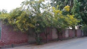Schöne gelbe Blumen-Baumanlage lizenzfreies stockbild
