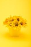Schöne gelbe Chrysantheme blüht im Vase, der auf Gelb lokalisiert wird Stockfotografie