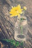 Schöne gelbe Chrysanthemenblume Stockfoto