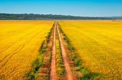 Schöne gelbe Felder mit einem blauen Himmel Lizenzfreies Stockfoto
