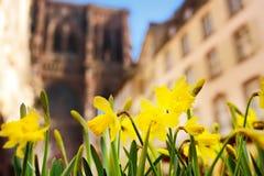 Schöne gelbe Iris blüht mit Kathedrale Notre Dame von Straßburg auf Hintergrund Stockfotos